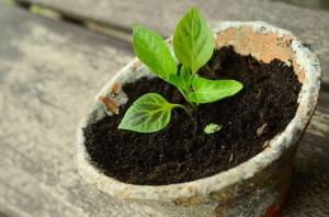 plant-786689_1280
