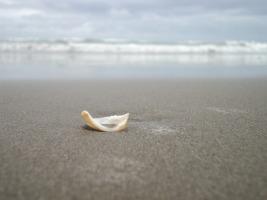 seashell-237326_1920